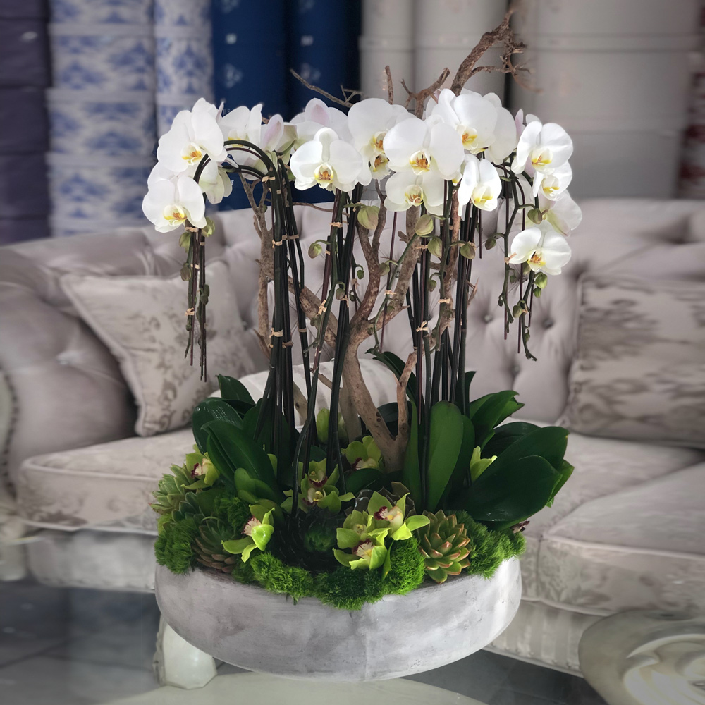 Grand Orchids