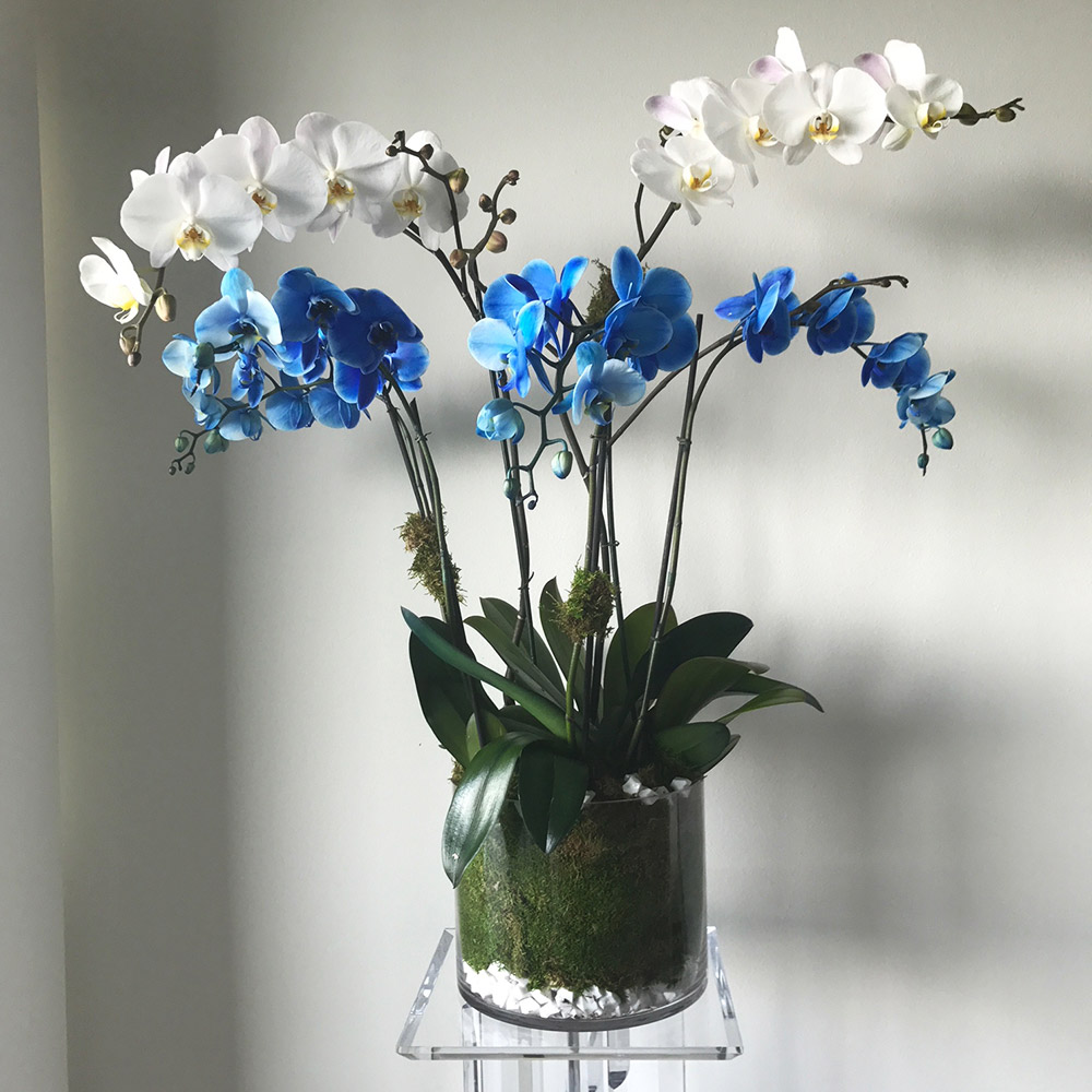 Blue and White Orchids In Glass Vase