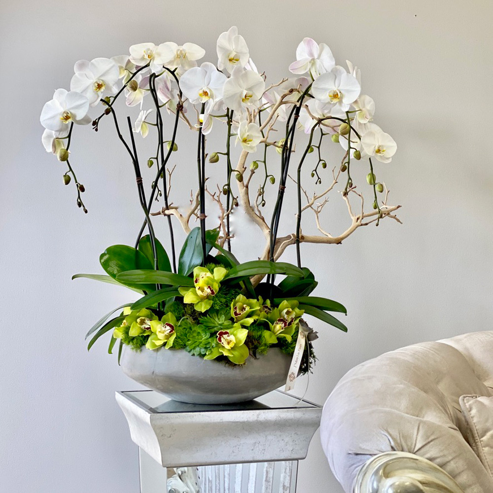 Grand Orchids for my Home